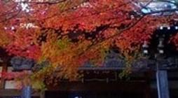 当山は横浜市都筑区の港北ニュータウンにあり、緑豊かな都筑中央公園からせせらぎの小路を通って歩いて来ることができます。境内には桜、芍薬、椿、もみじなどの樹木が四季を楽しませてくれます。特に、もみじは地元メディアでも紹介され […]